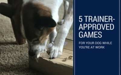 5 trainer-approved games for your dog while you're at work