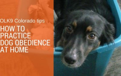 Tips on How to Practice Dog Obedience at Home