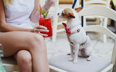 Dog-Friendly Restaurants, Breweries and Sports Bars along the Front Range