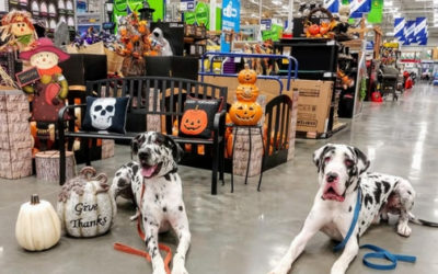 5 Tips On How To Help Your Dog have a Spook-free Halloween