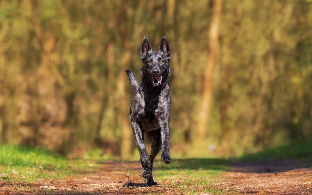 Must-Know Commands at the Dog Park