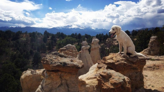 Safe Off-Leash Hiking with Your Dog