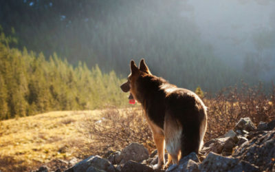 6 tips when taking your dog on a summer road trip