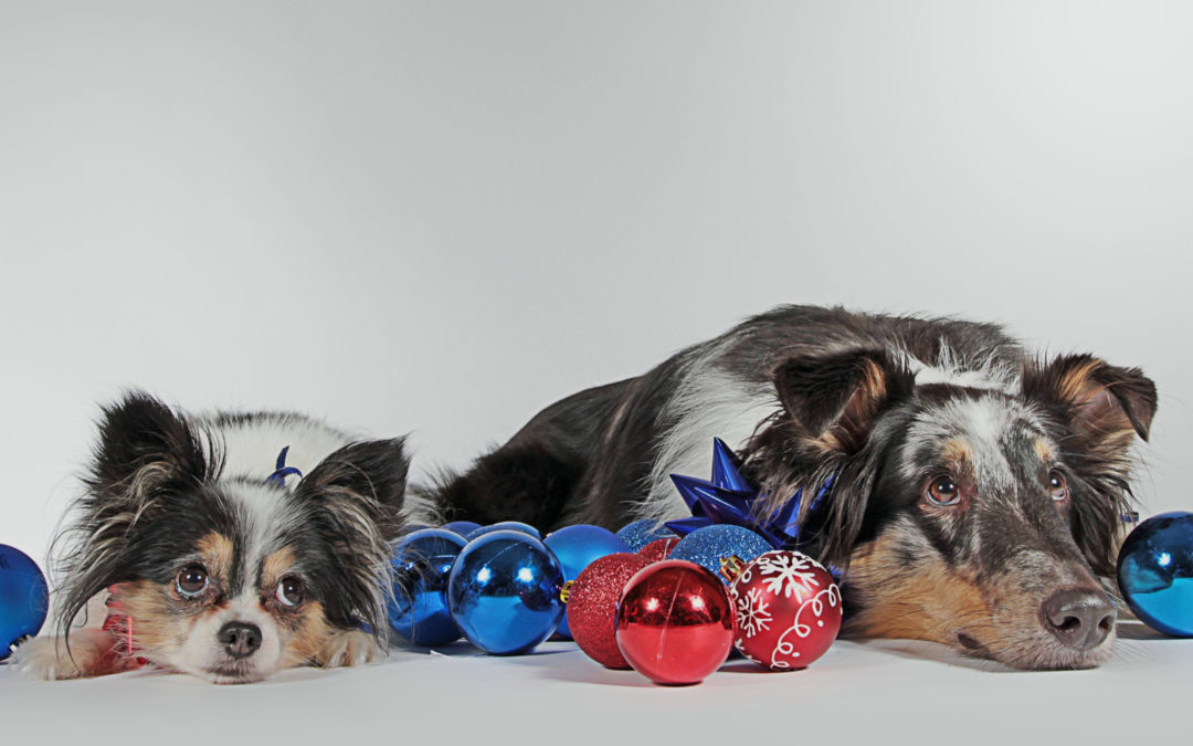 12 Best Holiday Gifts for Dogs – Top Picks from our Trainers