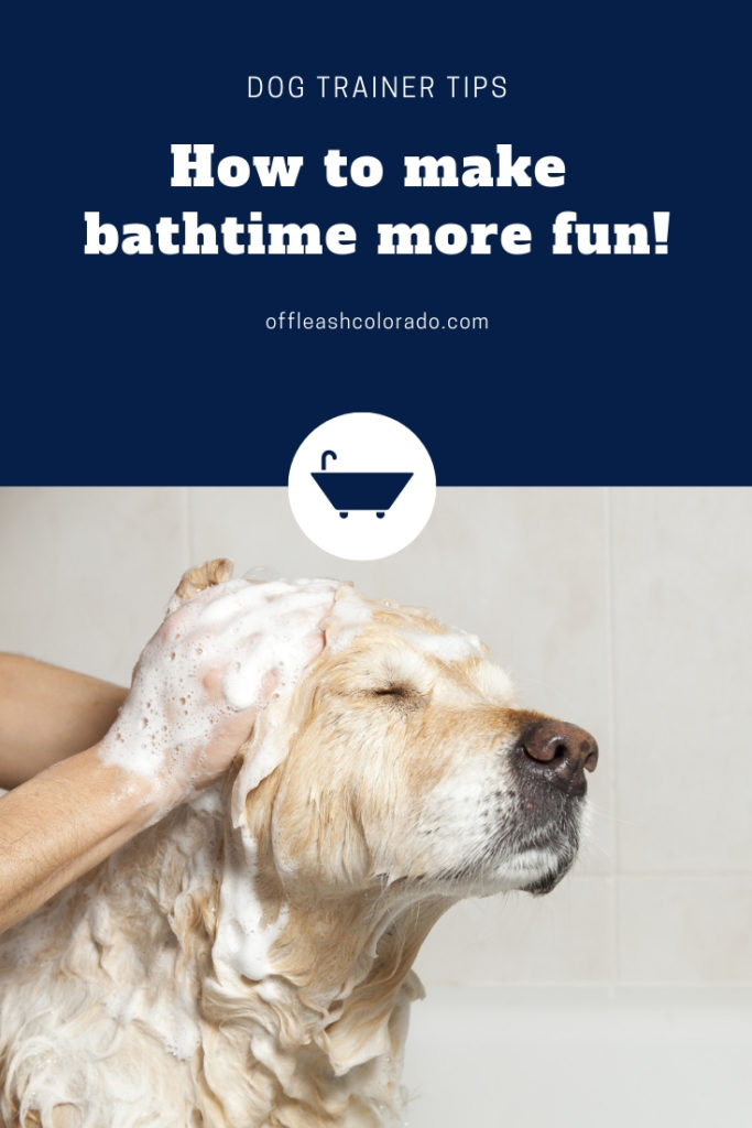 Our best tips on how to make doggy bath time more fun