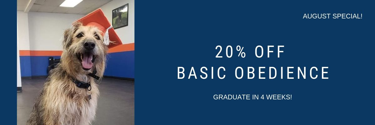 20% off Basic Obedience in August