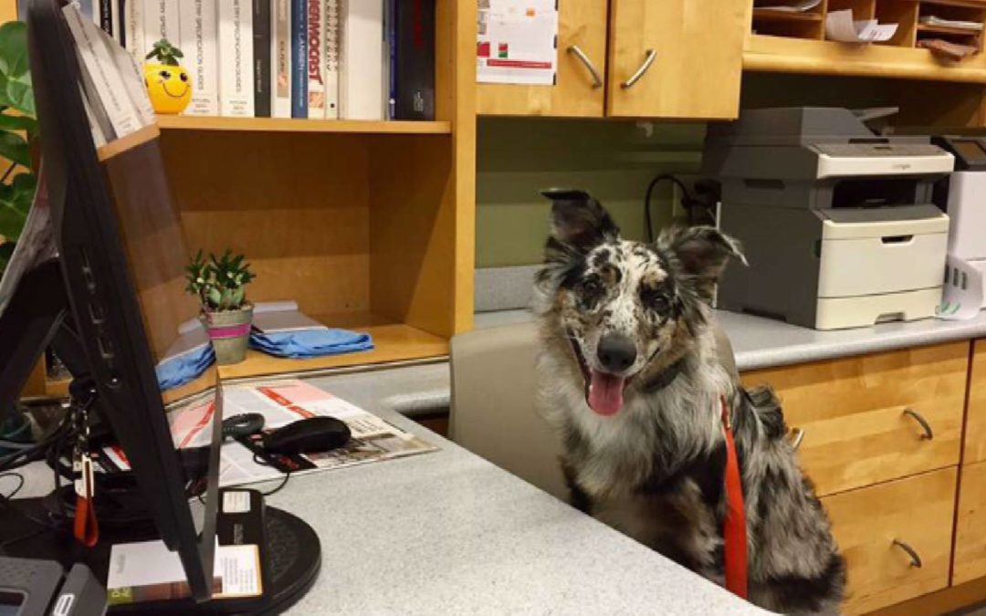 """Quiz:  Is Your Pooch Ready for """"Take Your Dog to Work"""" Day?"""