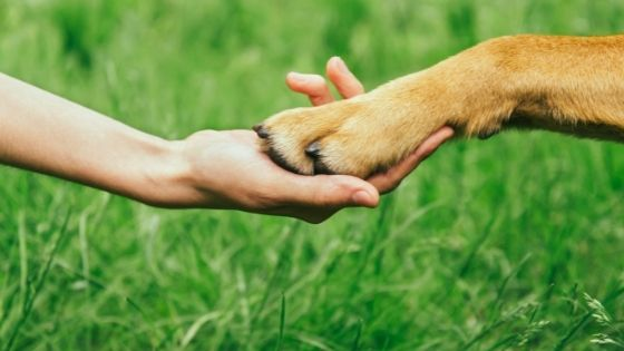 re-socializing your dog